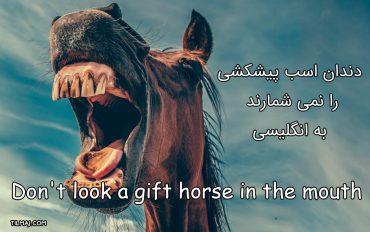 دندان اسب پیشکشی را نمی شمارند به انگلیسی