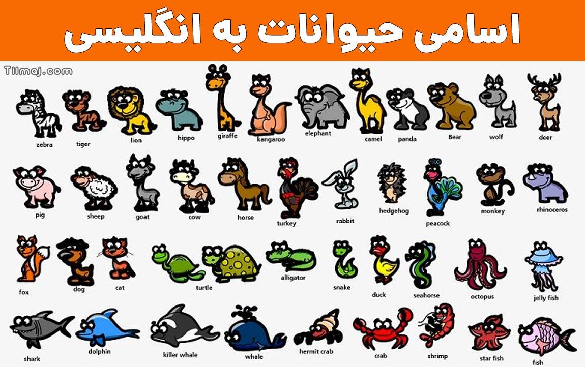 حیوانات به انگلیسی